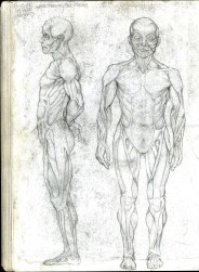 (Sketchbook 2005-7) - Muscles - Muscular System Study - Graphite